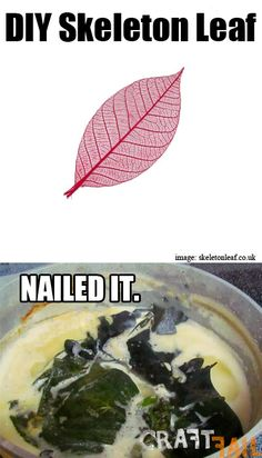 Skeleton-leaf-nailed-it
