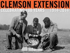 Asst. Agricultural Agent showing farmer and son (Mr. Taft Wilkins and William) how to grade and prepare for market. Image courtesy of Clemson University Special Collections. #ClemsonExt100