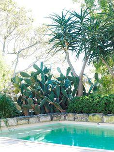 pool + cactus + palms