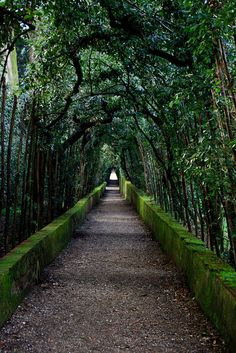 tree, dream, florence italy, alice in wonderland, green