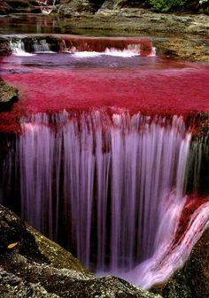 "Caño Cristales is a Colombian river located in the Serrania de la Macarena province of Meta. The river is commonly called ""The River of Five Colors,"" ""The Liquid Rainbow"" or even ""The Most Beautiful River in the World"" due to the algae-produced colors such as red, yellow, green, blue and black at the bottom of the river giving it a unique appearance."