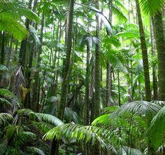 Jungle/Rain forest