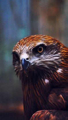 Beautiful Bird, Eagle