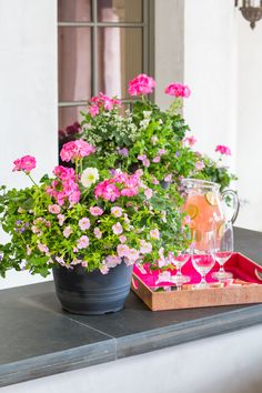 Southern Living Ready to Impress Container Garden pink on pink