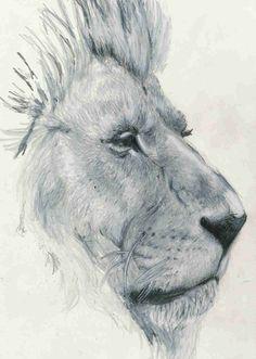 cute lion drawing tumblr