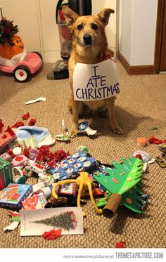 Dog shaming = always funny Did this for our late Christmas cards once