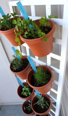 Another idea for a space saving herb garden.