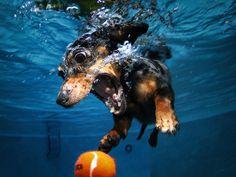 Underwater dog photos go viral
