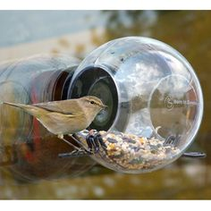 Window mounted birdfeeder