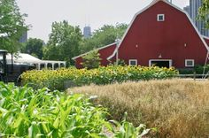 america farmland, red barn, barnsfarmscountri life, organic foods, dream hous
