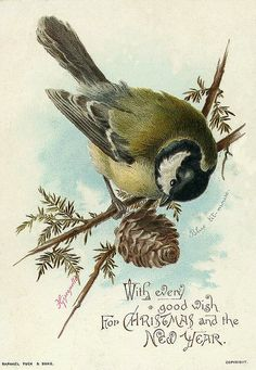 vintage christmas card...Bird on a limb with a pinecone