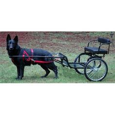 Best Dogs That Can Pull Cartsleds And Wagons Images Dogs Cart Working Dogs