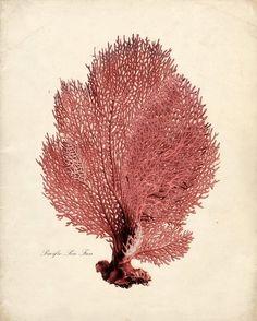 Beautiful Sea coral fan litho...