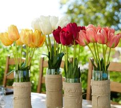 Tulips for spring celebrations.