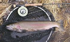 Pics of washington state on pinterest 28 pins for Fish count bonneville