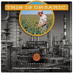 organic, soy, gmo, non-gmo, organic farming, organic farms, organic soy, orgranic food. www.cornucopia.org