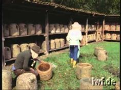 Heathland Beekeeping - 6 - Autumn Work in a Heather Skep Apiary