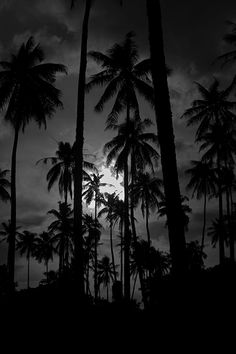 Tahiti Palms