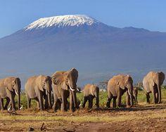 elephants, kenya safari, anim, african safari, safari tanzania