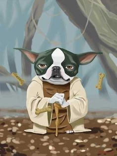 Yoda Boston Terrier