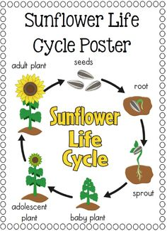 Life Cycles, Frog, Pumpkin, Apple, Sunflower, Plant, Ant, Butterfly, Watermelon Salmon and Sea Turtle that you can paste onto painted paper plates. A total of 10 life cycle (I will be adding more) activities to supplement your science program.$