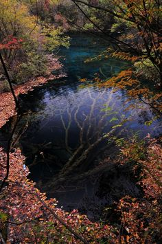 An Underwater Tree in Jiuzhaigou Valley, from deification.tumblr.com and via This is Colossal.