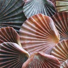sea shells by the sea shore.