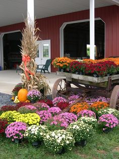 Fall Farm Market