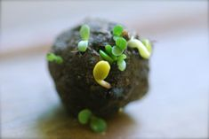 Small seed bomb sprouting