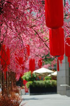 Red lanterns fill the air during Chinese New Year as a symbol of prosperous business and blooming life.