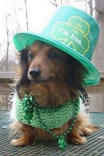 St. Patty's Day Pup