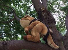 Ollie the Guar took a break from the ESO action at QuakeCon to chase a Khajiit up a tree.