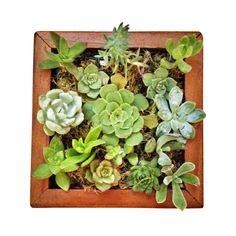 Handmade Vertical Garden DIY Kit   dotandbo.com