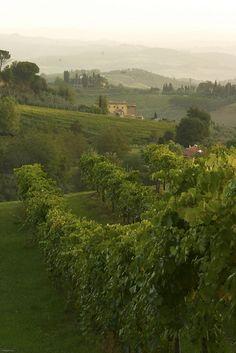 Tuscan Green, Italy