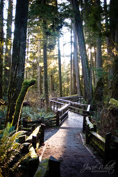 Cathedral Grove - Vancouver Island