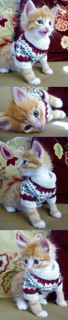A kitten in a sweater!