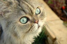 Homemade Cat Treat Recipes - Five tempting treats recipes for kitty.