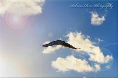 Flying High - Photo taken by Me.  Sabrina Perri  perri photographi, fli high, sabrina perri