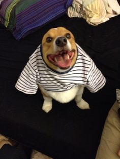 corgiaddict:  i has a happy!