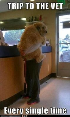 This is paij at the vet!