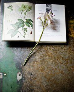 natural history, vans, der spekflow, van der, jeroen van, bloom, botan, blog, flowers