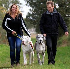 A new home at last for the blind Great Dane and her devoted guide dog.  It's the happy ending that Lily the blind great dane and her trusty friend turned guide dog Maddison deserve.  When the Daily Mail featured the heart-warming tale of the two great danes, who were looking for a new home, more than 2,000 dog lovers responded by offering to take them.  Now Lily and Maddison are moving from the Dogs Trust centre in Shrewsbury to live with the Williams family 35 miles away in Crewe, Cheshire.