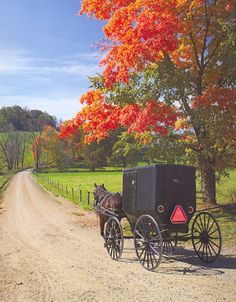 Amish buggy traveling in Autumn