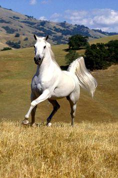 ☀White Horse In Field