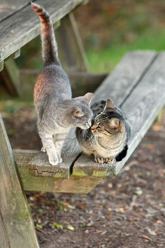 Cats on picnic table