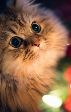 Big eyes and MAGNIFICENT!!