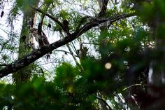 Pic from a short family drive through the Everglades. Hannah took this one of a Hawk.