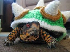 a crocheted Bowser costume for a turtle. We can't get enough of this guy over here!