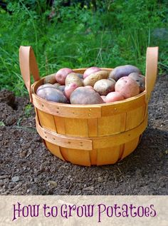 How to Grow Potatoes - Turning the Clock Back