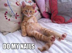 funny cats, do my nails